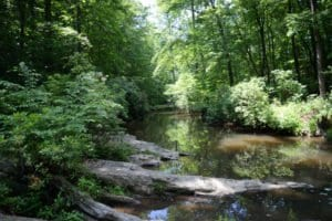 prince william forest park hiking review - virginia