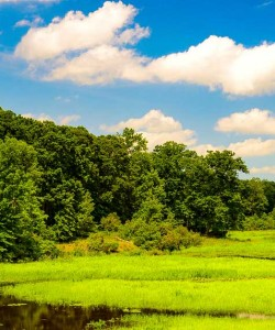 The Marshlands - Mason Neck State Park Hiking Review