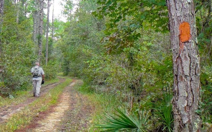 Florida National Scenic Trail Hiking Review