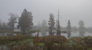 A foggy morning at circle b reserve in polk county florida