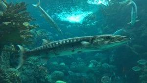 florida aquarium shark tanks in 4k wildlife video