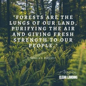 Forests are the lungs of our land, purifying the air and giving fresh strength to our people. Nature Meme