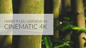 Harry P Leu Gardens in Cinematic 4k in Orlando Florida