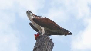 Lake Apopka WIldlife Drive Cinematic 4K Nature Video Cover Photo
