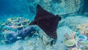 Learn Facts About Sting Rays From Clear Landing