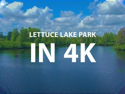 Lettuce Lake Park Nature Video In 4k