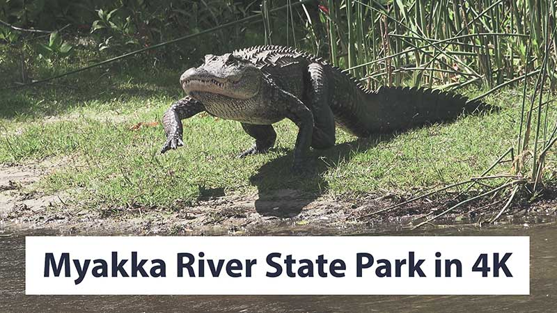 Myakka River State Park & Deep Hole 4K Cinematic Nature Video