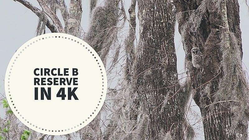 Circle B Reserve 4K Wildlife Video – March 2018