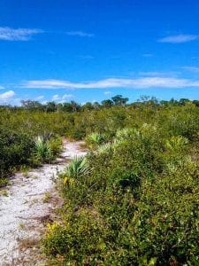 Pond Hawk Natural Scrub Area Hiking Review