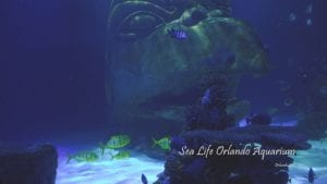 Sea Life Orlando Aquarium Cinematic 4K Wildlife Video Cover Photo