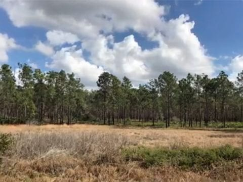 Hiking Central Florida In Time Lapse Nature Video