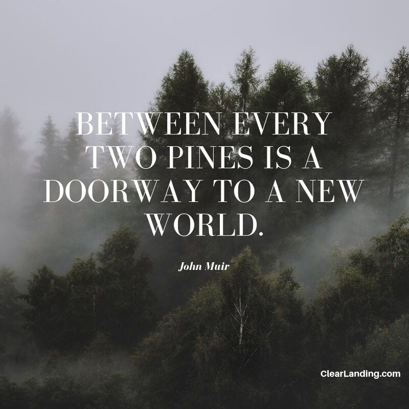 between every two pines is a doorway to a new world nature meme by clear landing