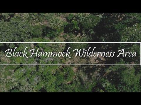 Black Hammock Wilderness Area Cinematic 4K Nature Video