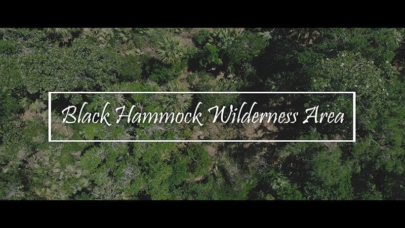 Black Hammock Wilderness Area Cinematic 4K Nature Video