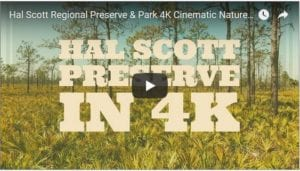 hal scott regional preserve and park in cinematic 4k nature video