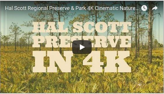 Hal Scott Regional Preserve & Park in Cinematic 4K