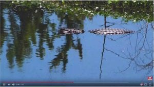 lacosta urban wetlands 4k nature video cover photo
