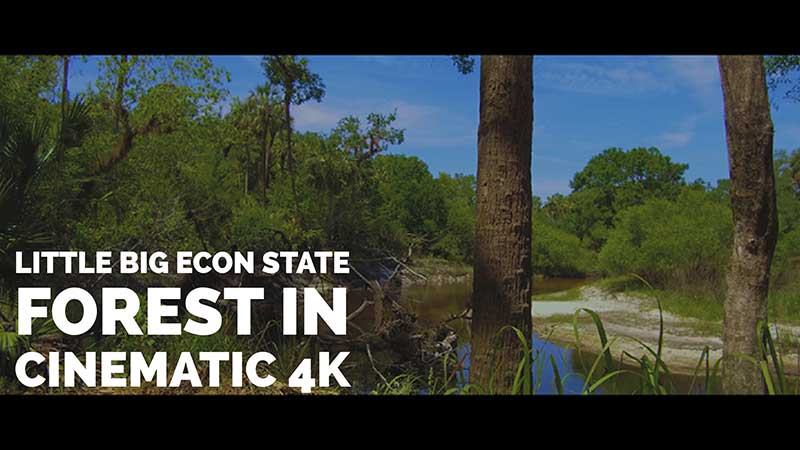 Little Big Econ State Forest Cinematic 4K Nature Video