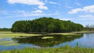 orlando wetlands park cinematic 4k nature video cover photo