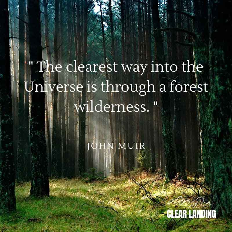 the clearest way into the universe is through a forest wilderness nature meme by clear landing